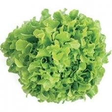 Salotų lapai Lolllo biondo PL kg