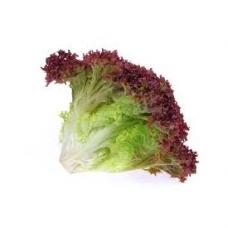 Salotų lapai Lollo rosso PL kg